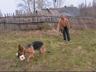 Апортировка немецкая овчарка