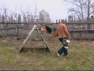 ОКД немецкая овчарка