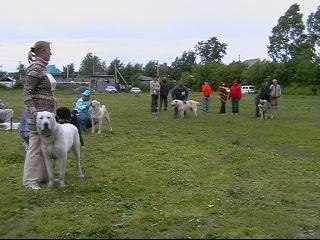 монопородная выставка среднеазиатских овчарок 2009 Новосибирск