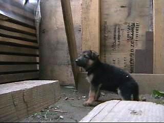 проверка щенков